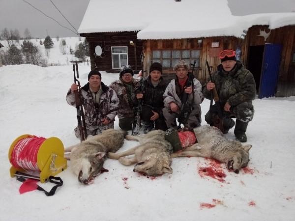 Волки убиты.